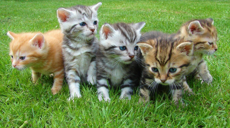 Dit wist jij nog niet over katten